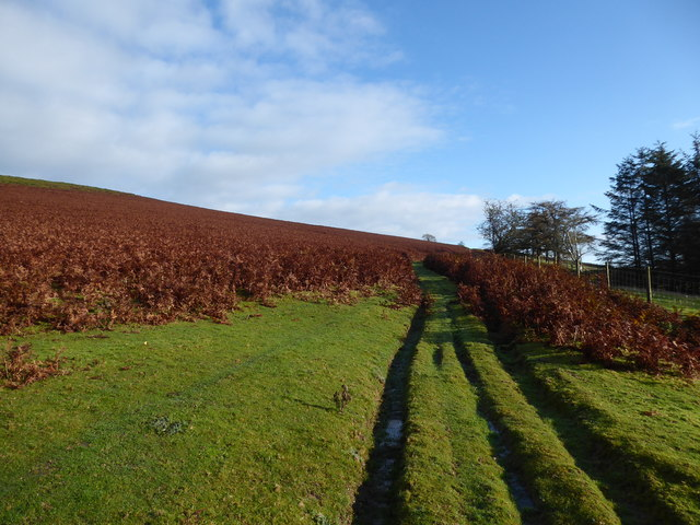 On the bridleway just above Little Moelfre farm
