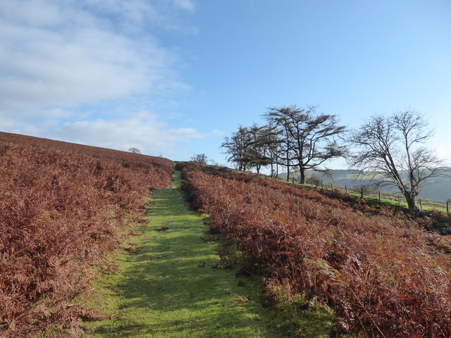 On a bridleway on the eastern side of Moelfre Hill