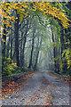 N4928 : Autumn by Kenneth Gallery Smyth