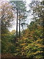 SK3282 : Autumn colour in Ecclesall Woods by Graham Hogg