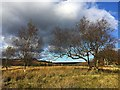 SK2679 : Moorland trees by Graham Hogg