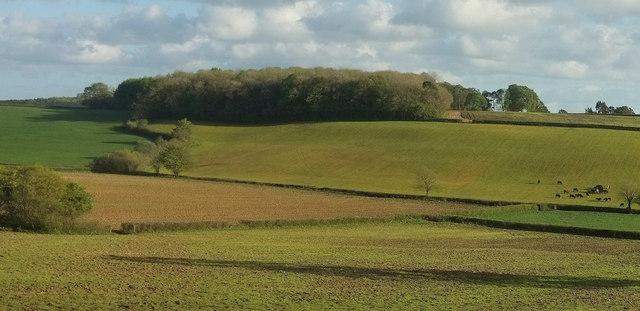 Towards Moors Plantation