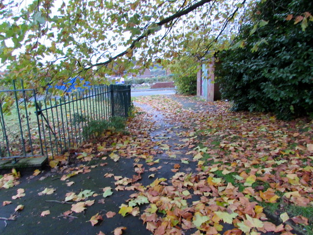 Fallen leaves on a path in Malpas, Newport