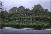 SU5690 : Woods by Wallingford Road, Brightwell-cum-Sotwell by David Howard