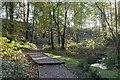 NT3396 : Autumn in East Wemyss Den by Becky Williamson