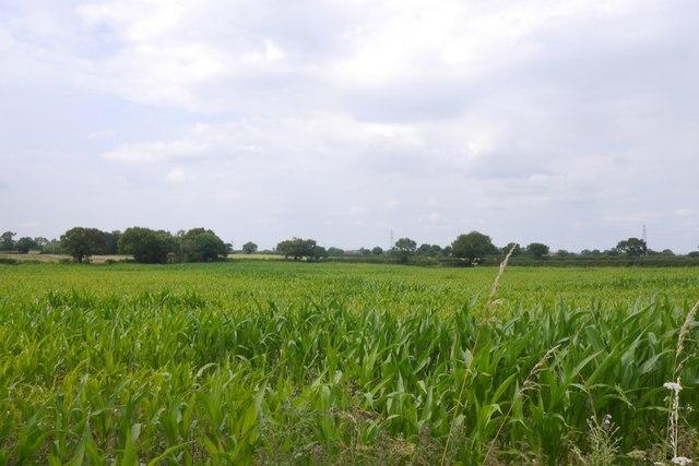 Fodder maize, Crowder's Lane