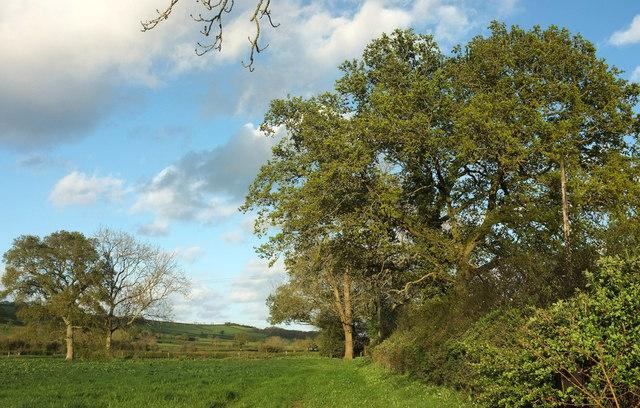 Field by Partway Lane