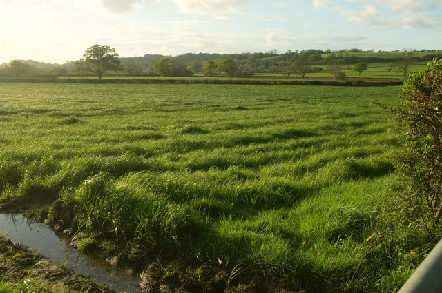 In the Chinnock Brook valley
