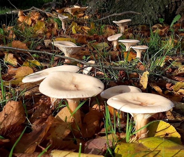 Colwall Green fungi