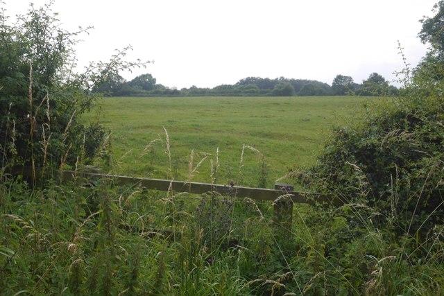 Field, Minshullhill