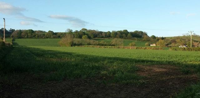 Farmland, Weston Farm