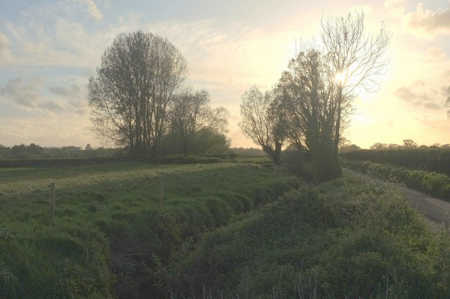 Trees by Chinnock Brook