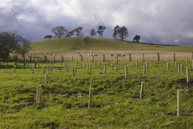 Hill, Spittal Farm