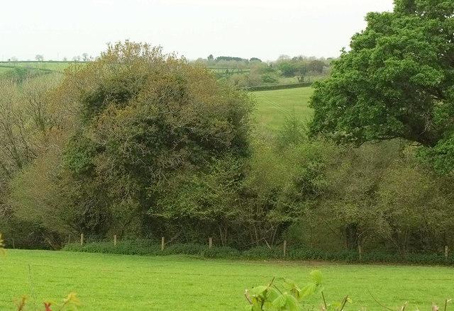Webber's Wood