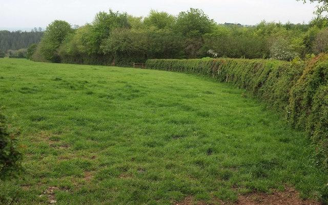 Field by Webber's Wood