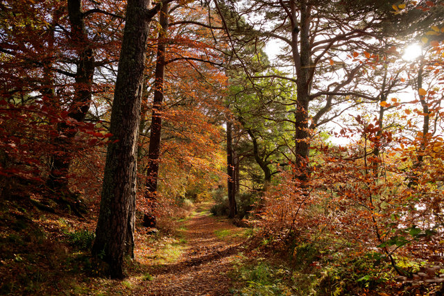 Balblair Wood close to Black Bridge