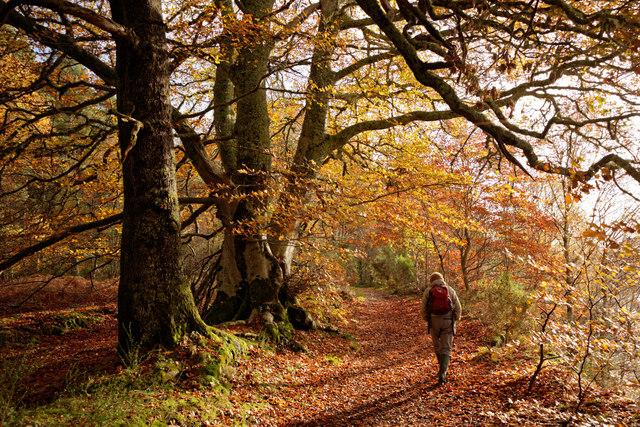 Path above the River Beauly