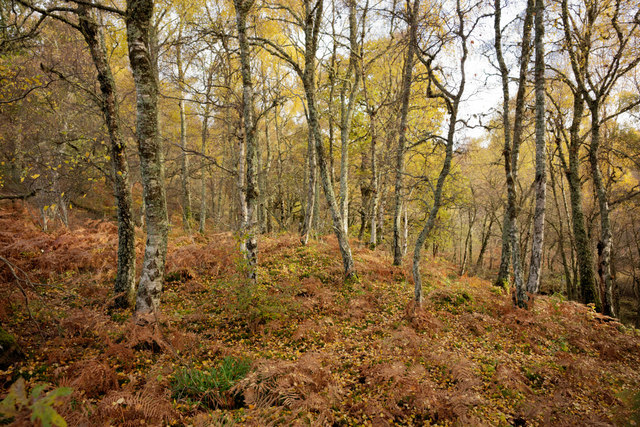 Balblair Wood near Beauly