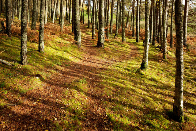Woodland near Balblair Quarry