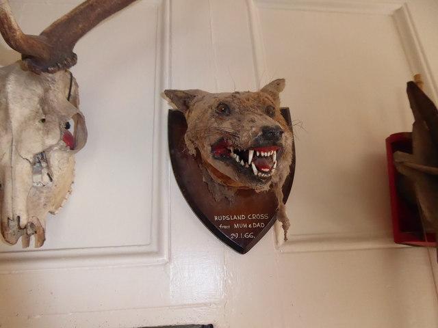 Stuffed hunting wall trophies inside the Lion Hotel, Llanbister