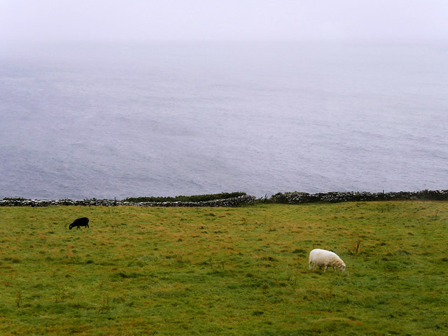 Dingle Peninsula, Sheep Grazing Below the Slea Head Drive