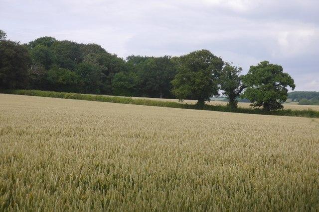 Wheat, Edwin Ralph