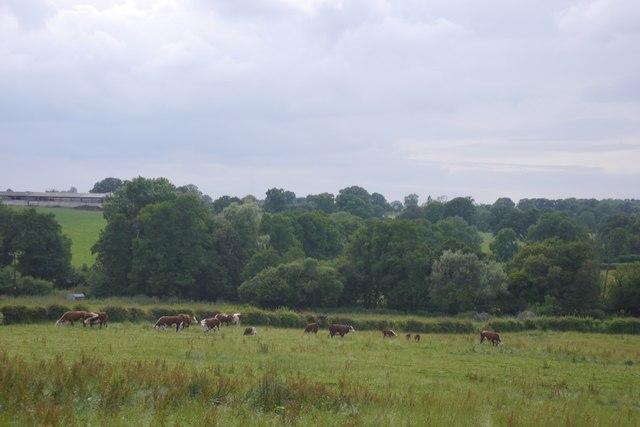 Herefords, Buckenhill Manor