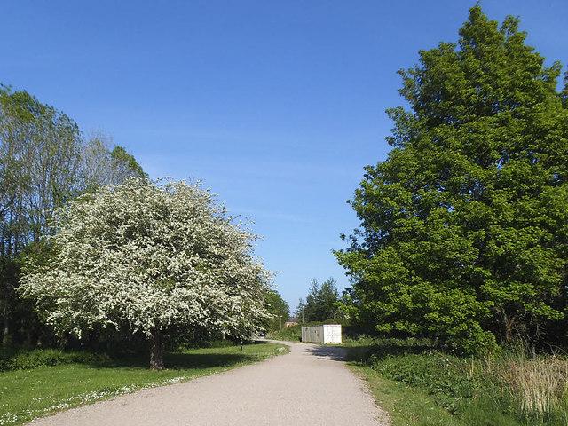 Trees near Thwaites Mill