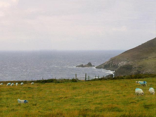 Sheep on the Cliff Top near Slea Head Drive