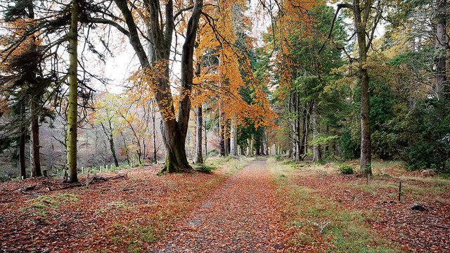 Estate track through woodland, Glen Orrin