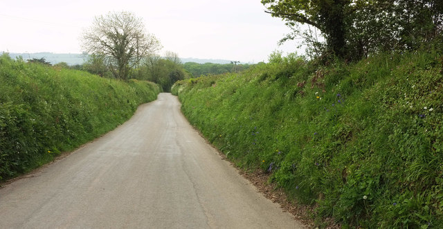 Road to Bere Ferrers