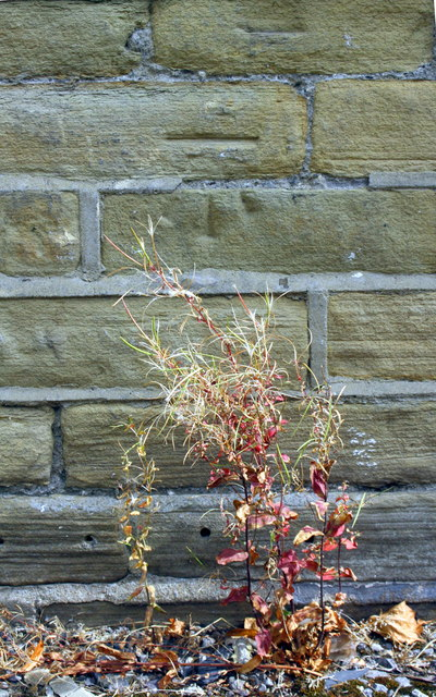 Benchmark on #569 Huddersfield Road