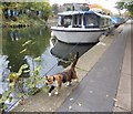 TQ3583 : Cat on the towpath by Marathon