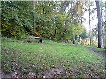SO5074 : Bench on Whitcliffe Common (Ludlow) by Fabian Musto