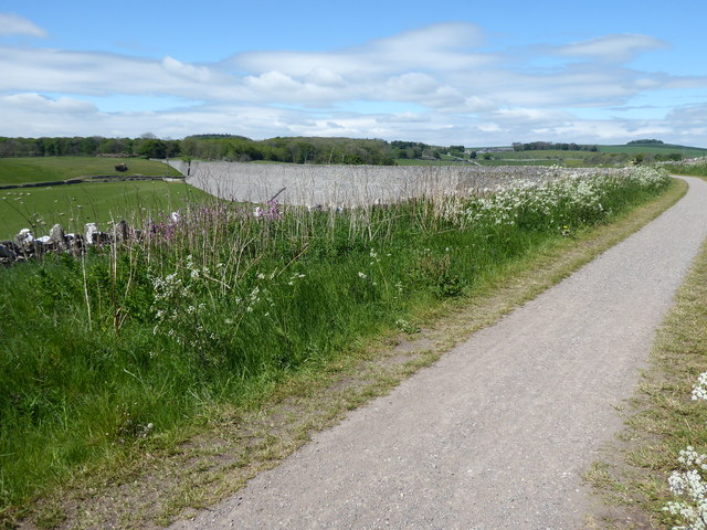 The Pennine Bridleway near Nine Miles Plantation