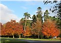 TF6929 : Colourful trees near The Norwich Gates at Sandringham House by Richard Humphrey