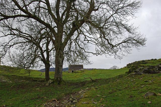 Grazing land, Bowland Bridge