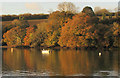 SX7343 : Trees by the Kingsbridge Estuary by Derek Harper