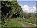 SN7553 : Former drove road in Cwm Doethie, Ceredigion by Roger  Kidd