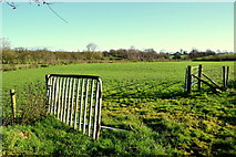 H5371 : Gate between fields, Bancran by Kenneth  Allen