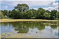 TQ1556 : Fetcham Mill Pond by Ian Capper