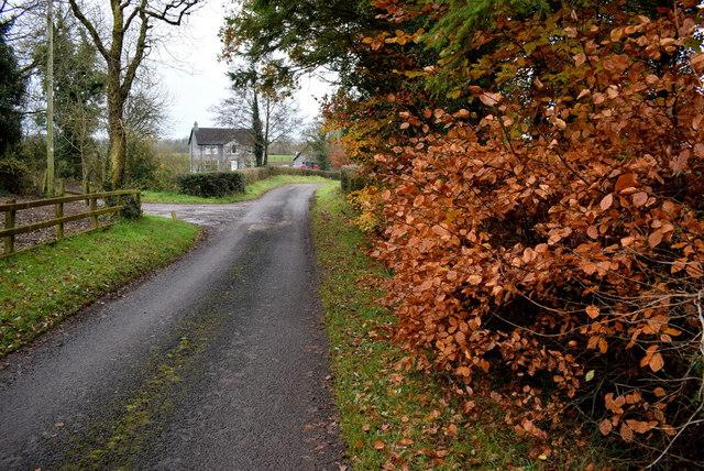 Beech hedge along Rosaleen Road