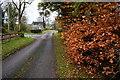 H4963 : Beech hedge along Rosaleen Road by Kenneth  Allen