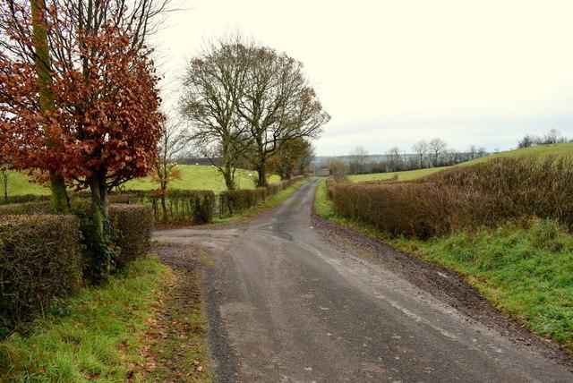 Trees along Rosaleen Road
