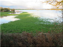 TL4279 : Partially flooded at Sutton Gault - The Ouse Washes by Richard Humphrey