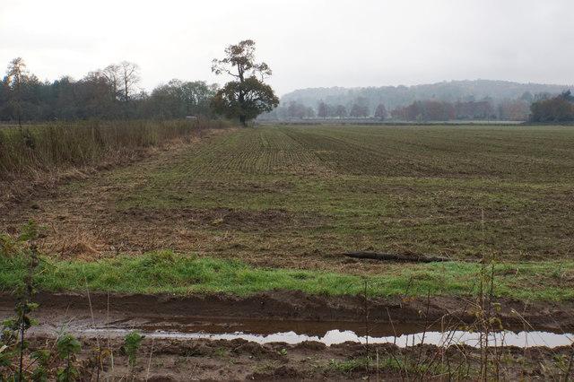 Field near Enville