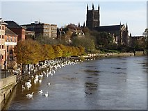 SO8454 : A swollen River Severn at Worcester by Philip Halling