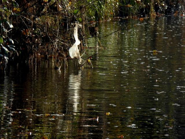 Camowen River at Cranny