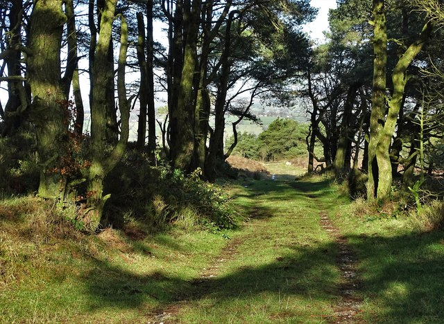 Track through a wood east of Revidge Moor