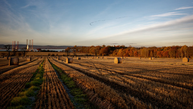 Field above Cromarty with skein of geese